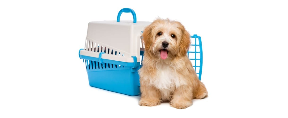 Transporting Pet from India to usa | International Pet Travel